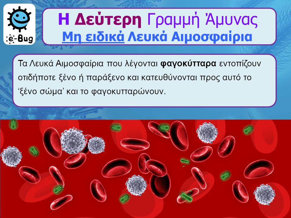 Η Δεύτερη Γραμμή Άμυνας Μη ειδικά Λευκά Αιμοσφαίρια Τα Λευκά Αιμοσφαίρια που λέγονται φαγοκύτταρα εντοπίζουν οτιδήποτε ξένο ή παράξενο και κατευθύνοντ