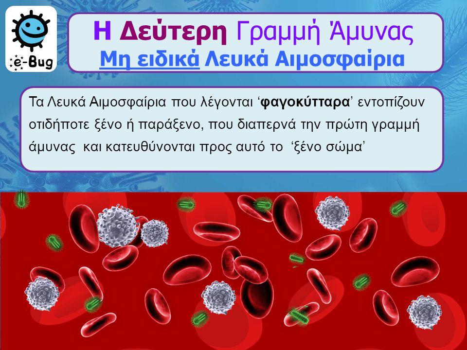 Η Δεύτερη Γραμμή Άμυνας Μη ειδικά Λευκά Αιμοσφαίρια Τα Λευκά Αιμοσφαίρια που λέγονται 'φαγοκύτταρα' εντοπίζουν οτιδήποτε ξένο ή παράξενο, που διαπερνά