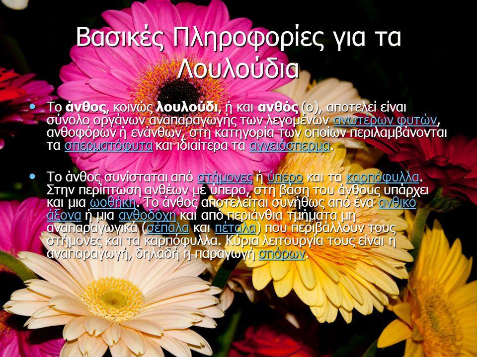 Βασικές Πληροφορίες για τα Λουλούδια Το άνθος, κοινώς λουλούδι, ή και ανθός (ο), αποτελεί είναι σύνολο οργάνων αναπαραγωγής των λεγομένων ανωτέρων φυτ