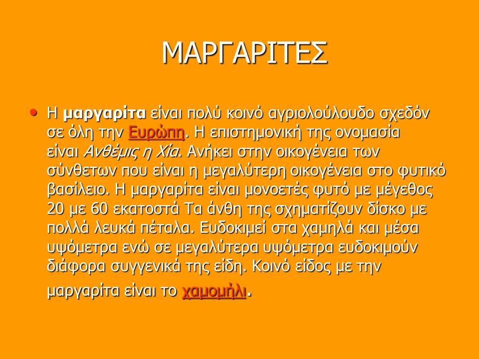 ΜΑΡΓΑΡΙΤΕΣ H μαργαρίτα είναι πολύ κοινό αγριολούλουδο σχεδόν σε όλη την Ευρώπη. Η επιστημονική της ονομασία είναι Ανθέμις η Χία. Ανήκει στην οικογένει