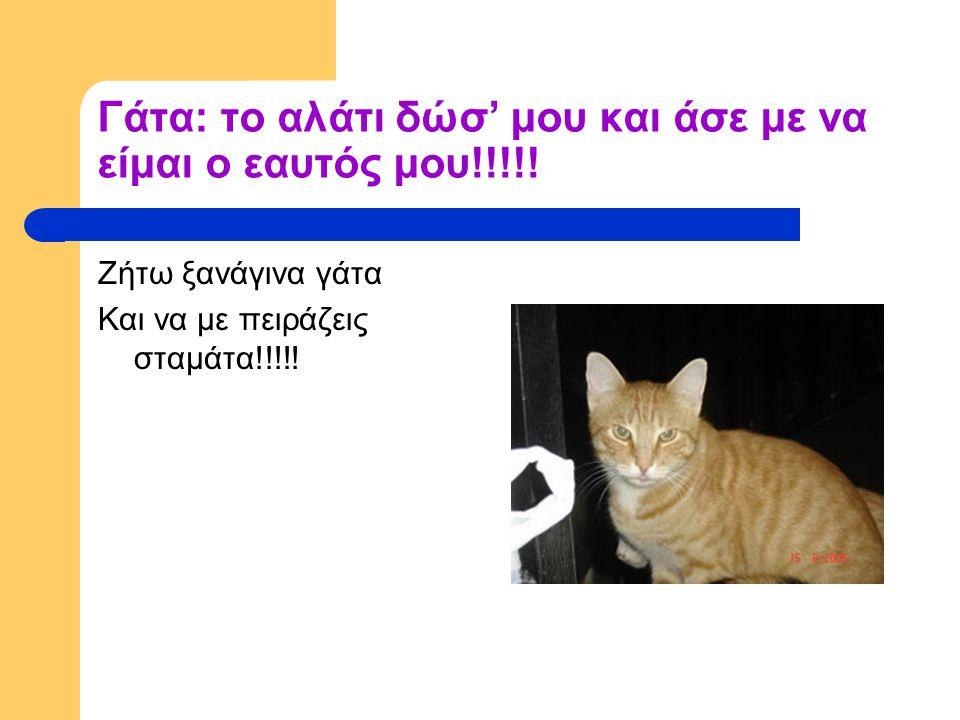 Γάτα: το αλάτι δώσ' μου και άσε με να είμαι ο εαυτός μου!!!!.