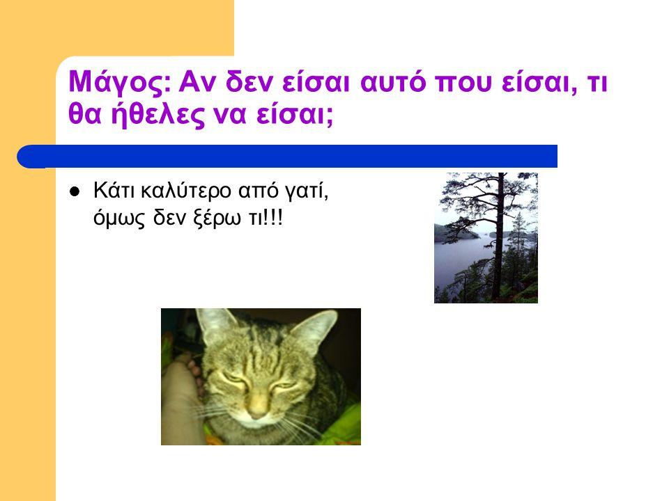 Μάγος: Αν δεν είσαι αυτό που είσαι, τι θα ήθελες να είσαι; Κάτι καλύτερο από γατί, όμως δεν ξέρω τι!!!