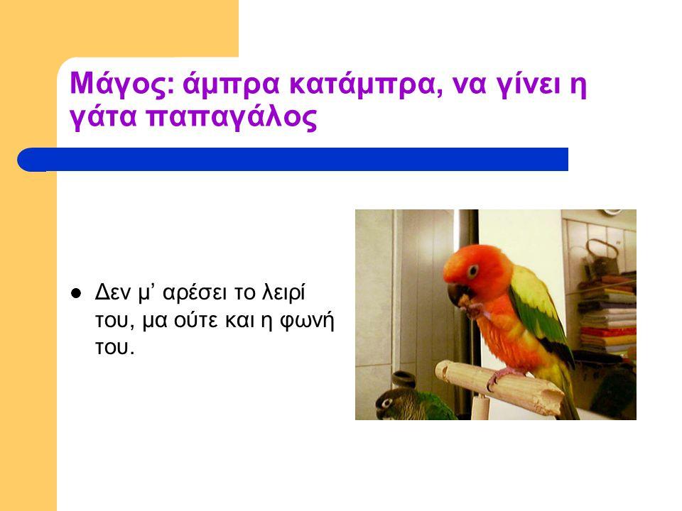 Μάγος: άμπρα κατάμπρα, να γίνει η γάτα παπαγάλος Δεν μ' αρέσει το λειρί του, μα ούτε και η φωνή του.