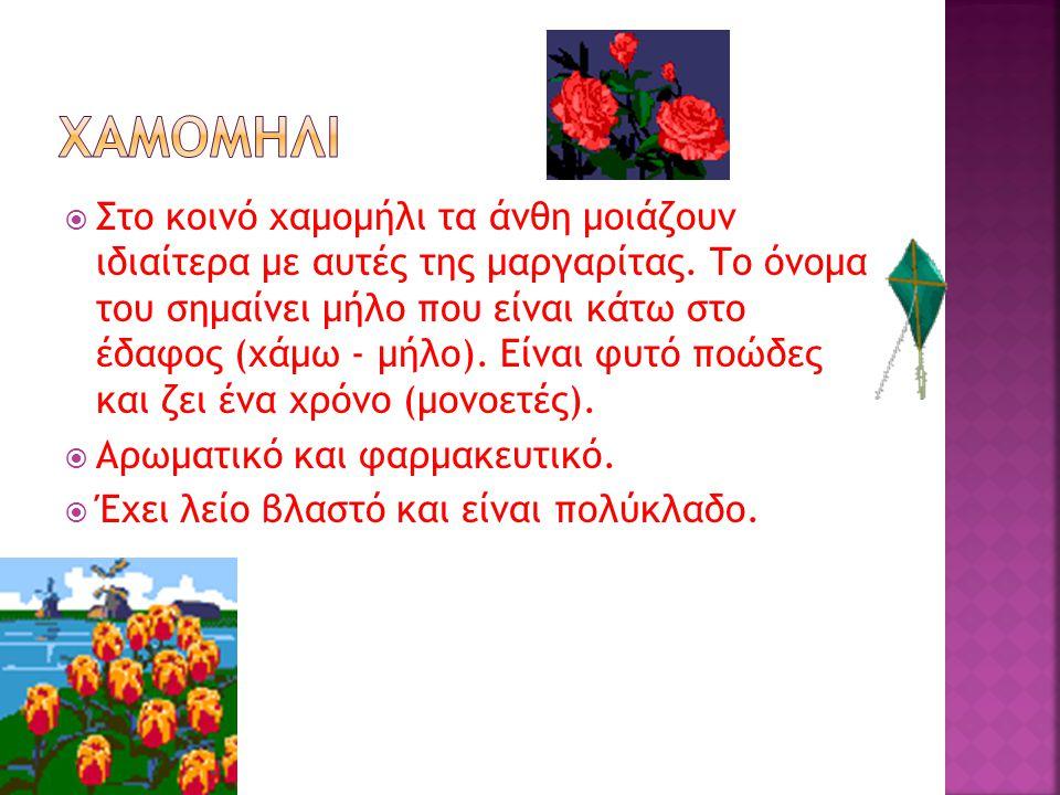  Στο κοινό χαμομήλι τα άνθη μοιάζουν ιδιαίτερα με αυτές της μαργαρίτας.