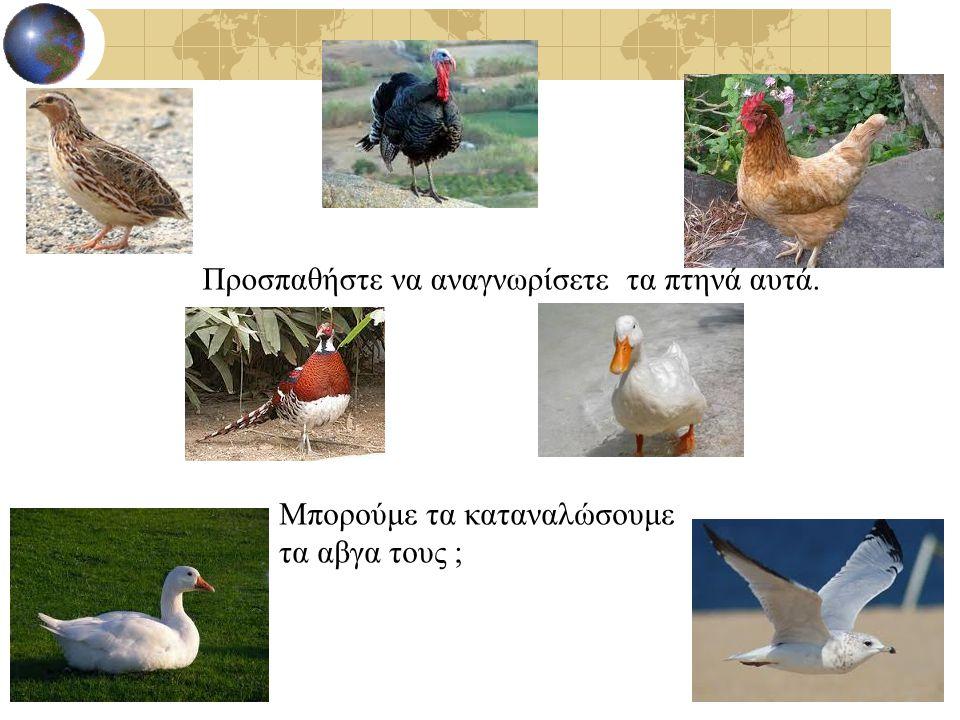 Προσπαθήστε να αναγνωρίσετε τα πτηνά αυτά. Μπορούμε τα καταναλώσουμε τα αβγα τους ;