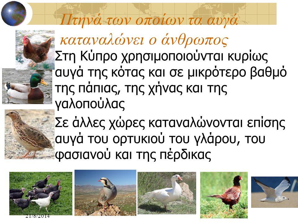 Πτηνά των οποίων τα αυγά καταναλώνει ο άνθρωπος Στη Κύπρο χρησιμοποιούνται κυρίως αυγά της κότας και σε μικρότερο βαθμό της πάπιας, της χήνας και της
