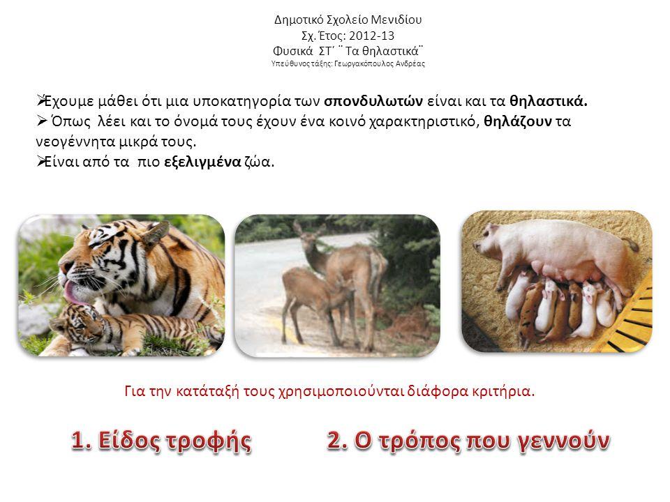 Δημοτικό Σχολείο Μενιδίου Σχ. Έτος: 2012-13 Φυσικά ΣΤ΄ ¨ Τα θηλαστικά¨ Υπεύθυνος τάξης: Γεωργακόπουλος Ανδρέας  Έχουμε μάθει ότι μια υποκατηγορία των