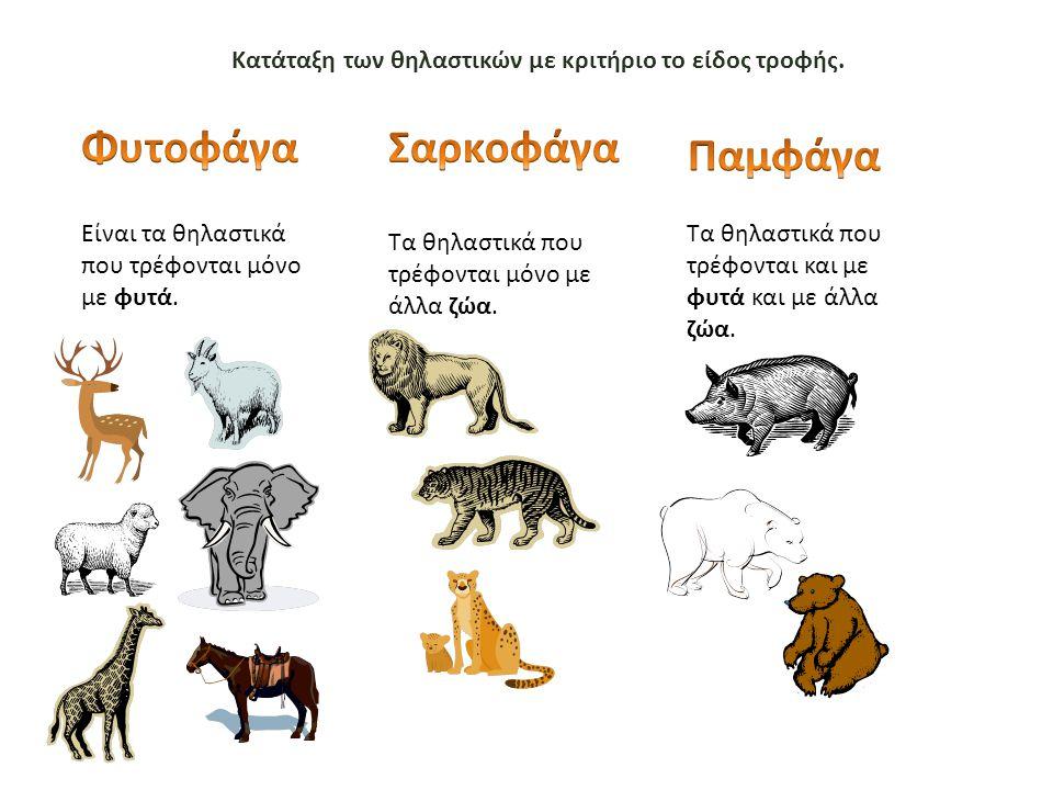 Κατάταξη των θηλαστικών με κριτήριο το είδος τροφής. Είναι τα θηλαστικά που τρέφονται μόνο με φυτά. Τα θηλαστικά που τρέφονται μόνο με άλλα ζώα. Τα θη
