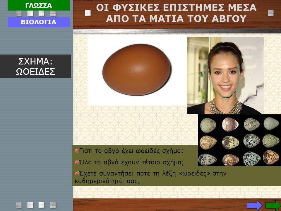 Γιατί το αβγό έχει ωοειδές σχήμα; Όλα τα αβγά έχουν τέτοιο σχήμα; Έχετε συναντήσει ποτέ τη λέξη «ωοειδές» στην καθημερινότητά σας; ΟΙ ΦΥΣΙΚΕΣ ΕΠΙΣΤΗΜΕ