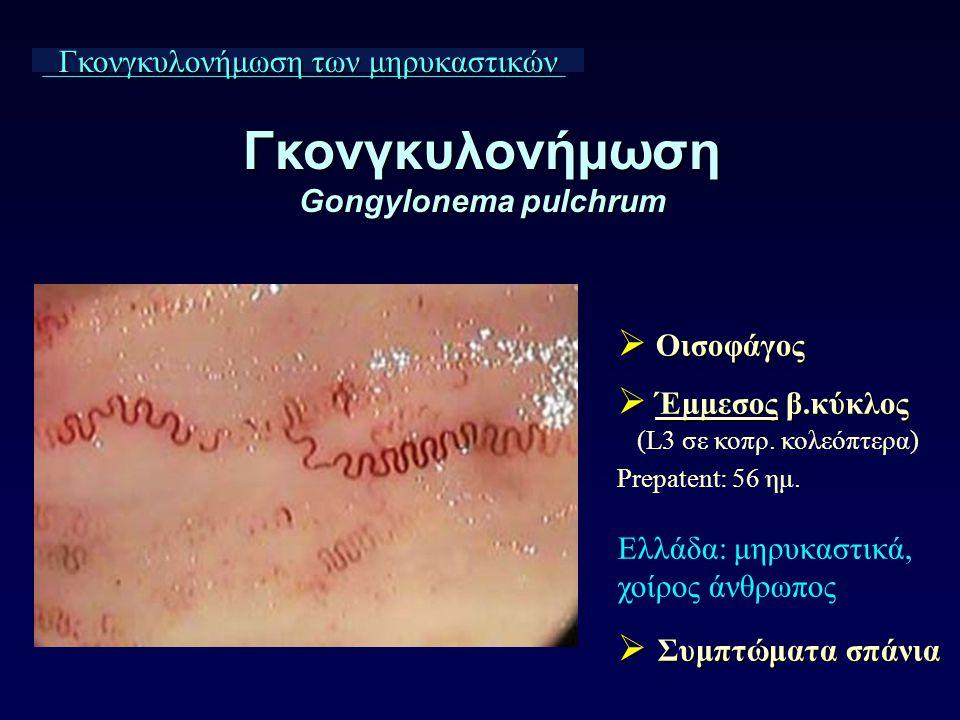 Γκονγκυλονήμωση Gongylonema pulchrum Γκονγκυλονήμωση των μηρυκαστικών  Οισοφάγος  Έμμεσος β.κύκλος (L3 σε κοπρ. κολεόπτερα) Prepatent: 56 ημ. Ελλάδα