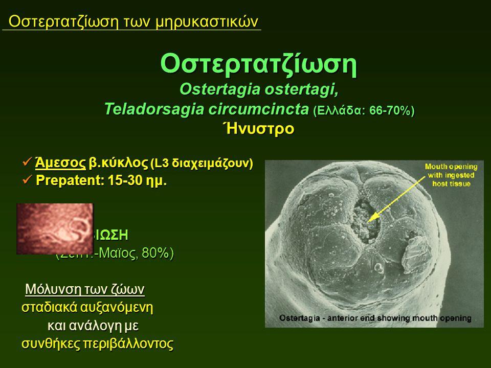 Οστερτατζίωση των μηρυκαστικών Άμεσος β.κύκλος (L3 διαχειμάζουν) Άμεσος β.κύκλος (L3 διαχειμάζουν) Prepatent: 15-30 ημ. Prepatent: 15-30 ημ. ΥΠΟΒΙΩΣΗ