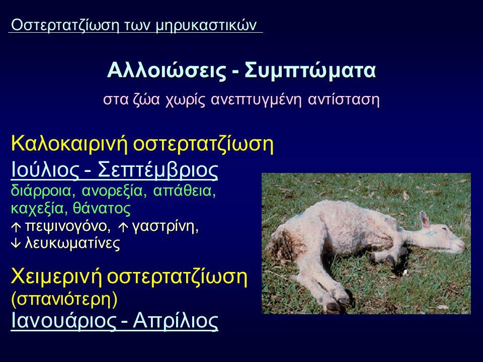 Αλλοιώσεις - Συμπτώματα στα ζώα χωρίς ανεπτυγμένη αντίσταση Καλοκαιρινή οστερτατζίωση Ιούλιος - Σεπτέμβριος διάρροια, ανορεξία, απάθεια, καχεξία, θάνατος  πεψινογόνο,  γαστρίνη,  λευκωματίνες Χειμερινή οστερτατζίωση (σπανιότερη) Ιανουάριος - Απρίλιος Οστερτατζίωση των μηρυκαστικών