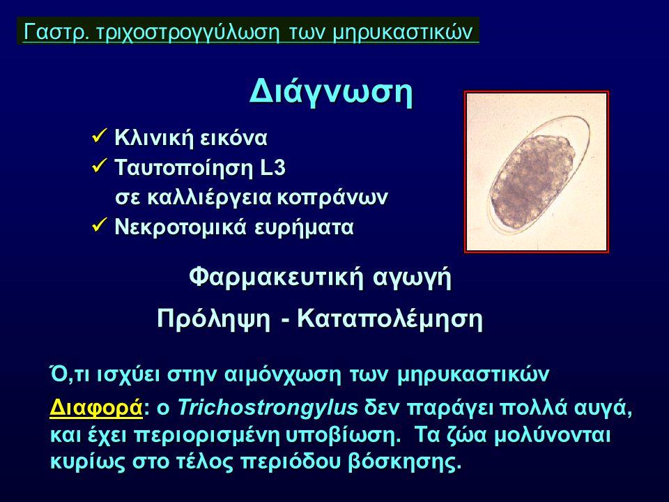 Γαστρ. τ μηρυκαστικών Γαστρ. τριχοστρογγύλωση των μηρυκαστικών Κλινική εικόνα Κλινική εικόνα Ταυτοποίηση L3 Ταυτοποίηση L3 σε καλλιέργεια κοπράνων σε