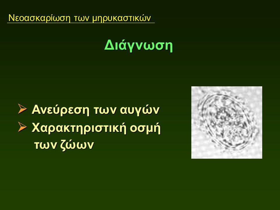 Αιμόνχωση των μηρυκαστικών  Ανεύρεση των αυγών  Χαρακτηριστική οσμή των ζώων των ζώων Διάγνωση Νεοασκαρίωση των μηρυκαστικών