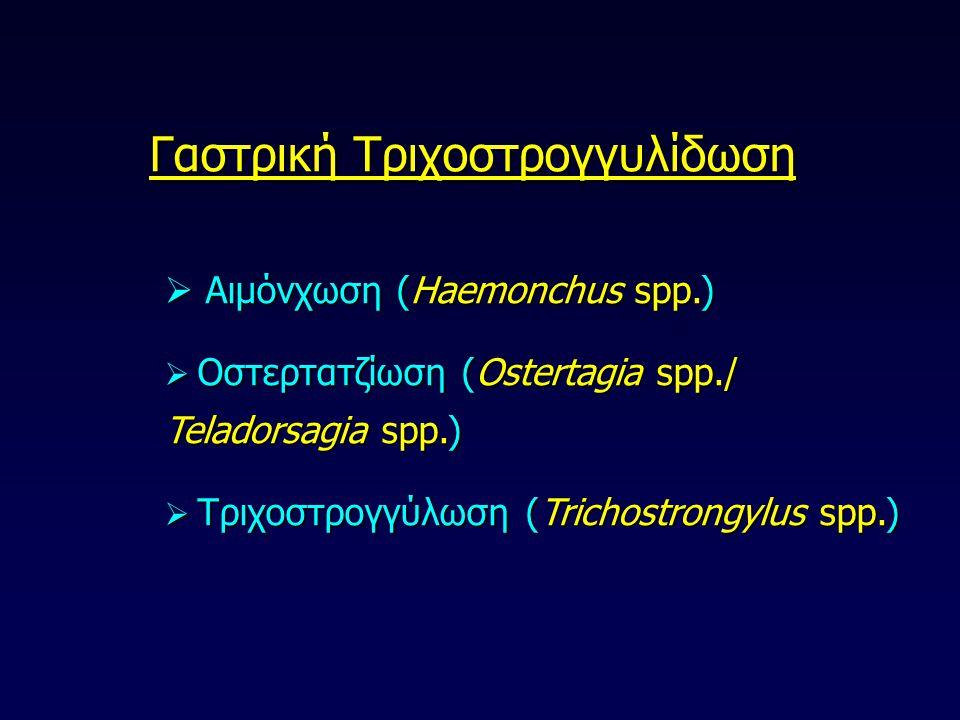 Γαστρική Τριχοστρογγυλίδωση  Αιμόνχωση (Haemonchus spp.)  Οστερτατζίωση (Ostertagia spp./ Teladorsagia spp.)  Τριχοστρογγύλωση (Trichostrongylus sp