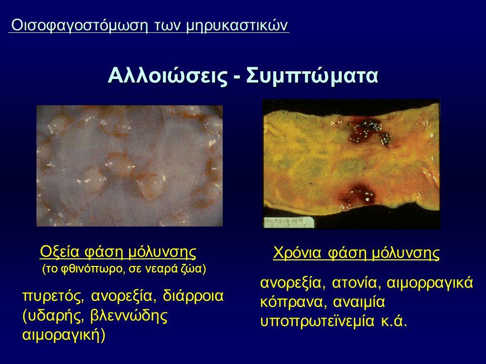 Αλλοιώσεις - Συμπτώματα Οισοφαγοστόμωση των μηρυκαστικών Οξεία φάση μόλυνσης (το φθινόπωρο, σε νεαρά ζώα) πυρετός, ανορεξία, διάρροια (υδαρής, βλεννώδης αιμοραγική) Χρόνια φάση μόλυνσης ανορεξία, ατονία, αιμορραγικά κόπρανα, αναιμία υποπρωτεϊνεμία κ.ά.
