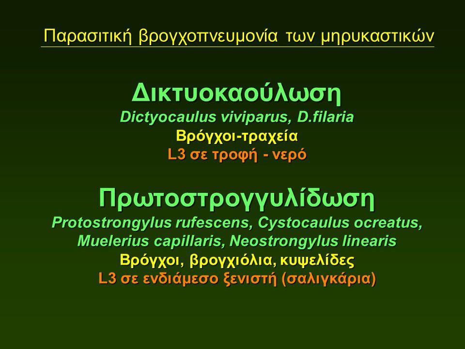 Παρασιτική βρογχοπνευμονία των μηρυκαστικών Δικτυοκαούλωση Dictyocaulus viviparus, D.filaria Βρόγχοι-τραχεία L3 σε τροφή - νερό Πρωτοστρογγυλίδωση Protostrongylus rufescens, Cystocaulus ocreatus, Muelerius capillaris, Neostrongylus linearis Βρόγχοι, βρογχιόλια, κυψελίδες L3 σε ενδιάμεσο ξενιστή (σαλιγκάρια)
