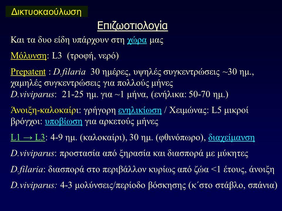 Επιζωοτιολογία Δικτυοκαούλωση Και τα δυο είδη υπάρχουν στη χώρα μας Μόλυνση: L3 (τροφή, νερό) Prepatent : D.filaria 30 ημέρες, υψηλές συγκεντρώσεις ~30 ημ., χαμηλές συγκεντρώσεις για πολλούς μήνες D.viviparus: 21-25 ημ.