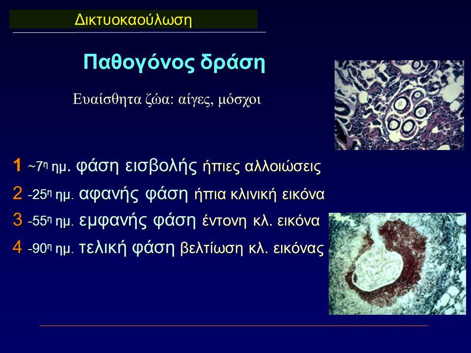 1 ~7 η ημ. φάση εισβολής ήπιες αλλοιώσεις 2 -25 η ημ. αφανής φάση ήπια κλινική εικόνα 3 -55 η ημ. εμφανής φάση έντονη κλ. εικόνα 4 -90 η ημ. τελική φά