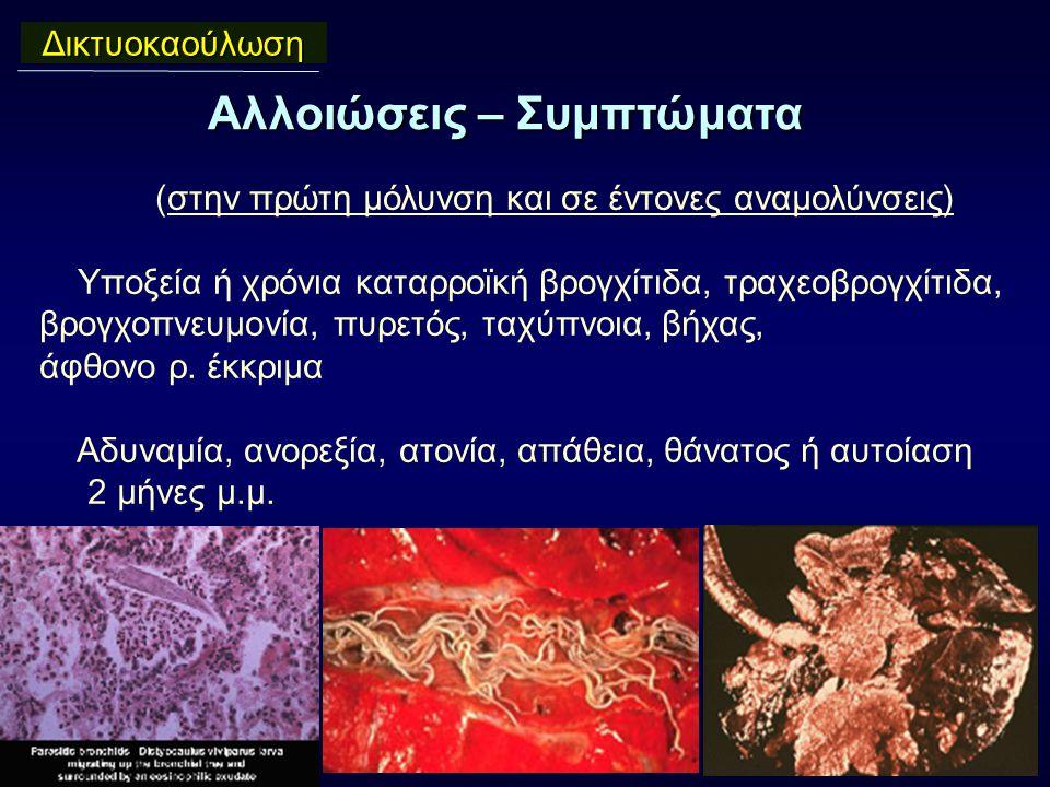 Αλλοιώσεις – Συμπτώματα Δικτυοκαούλωση (στην πρώτη μόλυνση και σε έντονες αναμολύνσεις) Υποξεία ή χρόνια καταρροϊκή βρογχίτιδα, τραχεοβρογχίτιδα, βρογχοπνευμονία, πυρετός, ταχύπνοια, βήχας, άφθονο ρ.