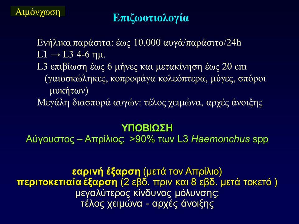 Αιμόνχωση Επιζωοτιολογία Ενήλικα παράσιτα: έως 10.000 αυγά/παράσιτο/24h L1 → L3 4-6 ημ. L3 επιβίωση έως 6 μήνες και μετακίνηση έως 20 cm (γαιοσκώληκες