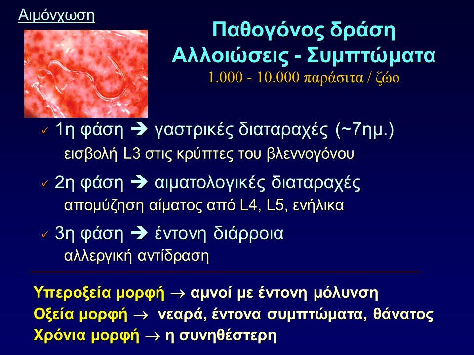 Αιμόνχωση 1η φάση  γαστρικές διαταραχές (~7ημ.) 1η φάση  γαστρικές διαταραχές (~7ημ.) εισβολή L3 στις κρύπτες του βλεννογόνου εισβολή L3 στις κρύπτες του βλεννογόνου 2η φάση  αιματολογικές διαταραχές 2η φάση  αιματολογικές διαταραχές απομύζηση αίματος από L4, L5, ενήλικα απομύζηση αίματος από L4, L5, ενήλικα 3η φάση  έντονη διάρροια 3η φάση  έντονη διάρροια αλλεργική αντίδραση αλλεργική αντίδραση Υπεροξεία μορφή  αμνοί με έντονη μόλυνση Υπεροξεία μορφή  αμνοί με έντονη μόλυνση Οξεία μορφή  νεαρά, έντονα συμπτώματα, θάνατος Οξεία μορφή  νεαρά, έντονα συμπτώματα, θάνατος Χρόνια μορφή  η συνηθέστερη Χρόνια μορφή  η συνηθέστερη Παθογόνος δράση Αλλοιώσεις - Συμπτώματα 1.000 - 10.000 παράσιτα / ζώο
