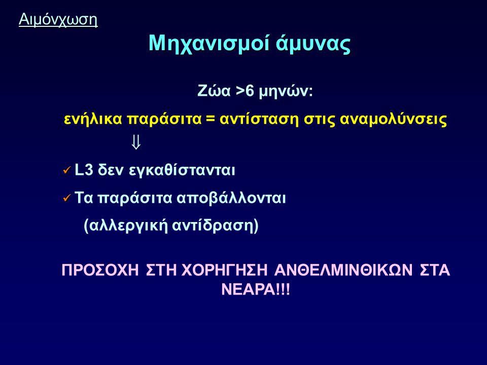 Αιμόνχωση Μηχανισμοί άμυνας Ζώα >6 μηνών: ενήλικα παράσιτα = αντίσταση στις αναμολύνσεις  L3 δεν εγκαθίστανται Τα παράσιτα αποβάλλονται (αλλεργική αντίδραση) ΠΡΟΣΟΧΗ ΣΤΗ ΧΟΡΗΓΗΣΗ ΑΝΘΕΛΜΙΝΘΙΚΩΝ ΣΤΑ ΝΕΑΡΑ!!!
