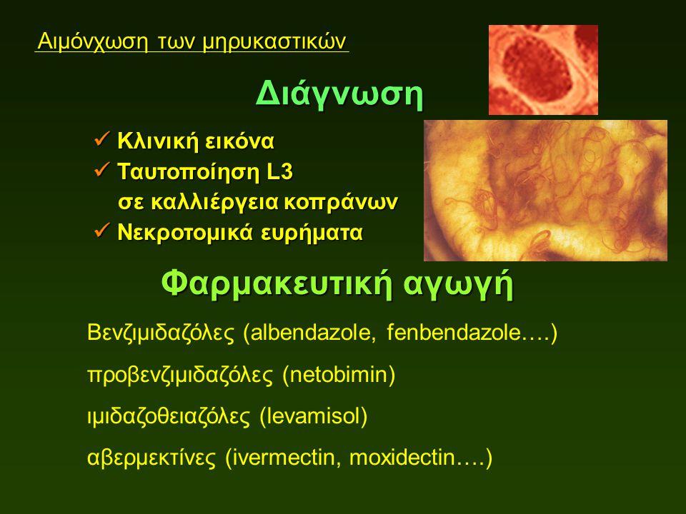 Αιμόνχωση των μηρυκαστικών Κλινική εικόνα Κλινική εικόνα Ταυτοποίηση L3 Ταυτοποίηση L3 σε καλλιέργεια κοπράνων σε καλλιέργεια κοπράνων Νεκροτομικά ευρήματα Νεκροτομικά ευρήματα Διάγνωση Φαρμακευτική αγωγή Βενζιμιδαζόλες (albendazole, fenbendazole….) προβενζιμιδαζόλες (netobimin) ιμιδαζοθειαζόλες (levamisol) αβερμεκτίνες (ivermectin, moxidectin….)