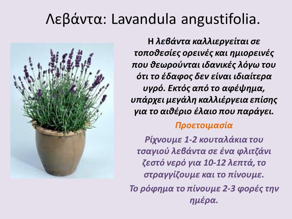 Λεβάντα: Lavandula angustifolia. Η λεβάντα καλλιεργείται σε τοποθεσίες ορεινές και ημιορεινές που θεωρούνται ιδανικές λόγω του ότι το έδαφος δεν είναι