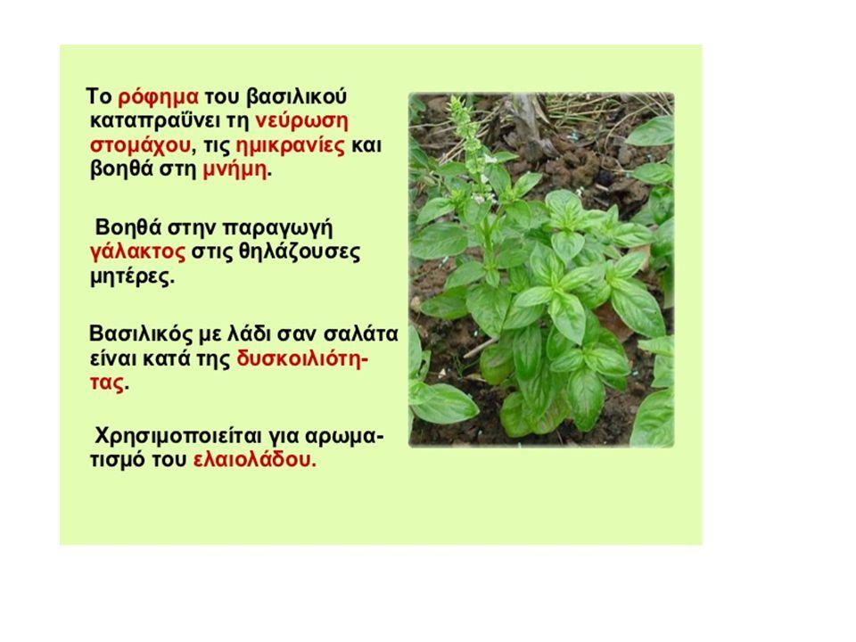 λουίζα Βράστε λίγα φύλλα λουίζας για 15 λεπτά και μετά αφήστε τα άλλα 10 λεπτά να κρυώσουν και να ελευθερωθεί στο νερό το αιθέριο έλαιο του φυτού.