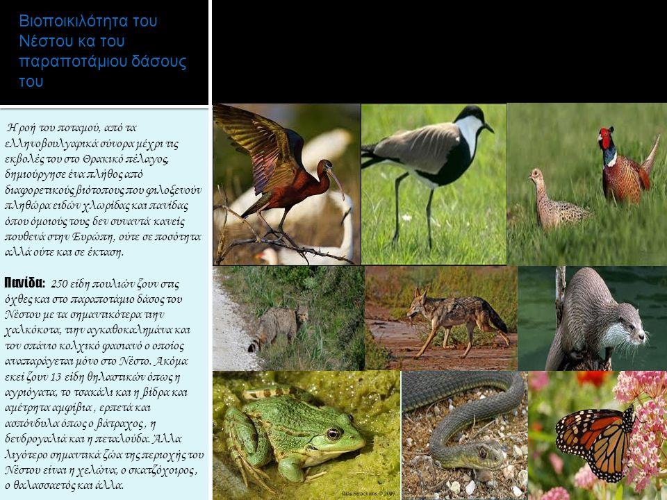Βιοποικιλότητα του Νέστου κα του παραποτάμιου δάσους του Η ροή του ποταμού, από τα ελληνοβουλγαρικά σύνορα μέχρι τις εκβολές του στο Θρακικό πέλαγος,