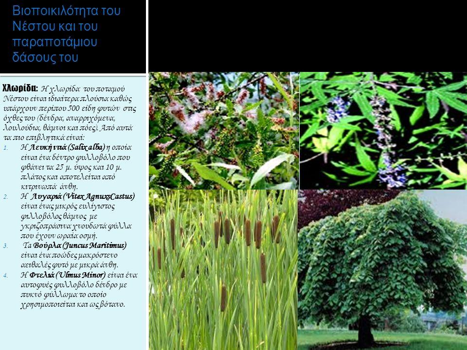 Βιοποικιλότητα του Νέστου και του παραποτάμιου δάσους του Χλωρίδα: H χλωρίδα του ποταμού Νέστου είναι ιδιαίτερα πλούσια καθώς υπάρχουν περίπου 500 είδ