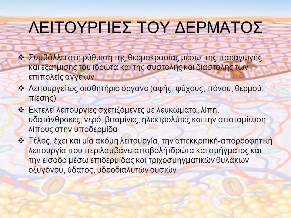 ΛΕΙΤΟΥΡΓΙΕΣ ΤΟΥ ΔΕΡΜΑΤΟΣ  Συμβάλλει στη ρύθμιση της θερμοκρασίας μέσω: της παραγωγής και εξάτμισης του ιδρώτα και της συστολής και διαστολής των επιπολείς αγγείων  Λειτουργεί ως αισθητήριο όργανο (αφής, ψύχους, πόνου, θερμού, πίεσης)  Εκτελεί λειτουργίες σχετιζόμενες με λευκώματα, λίπη, υδατάνθρακες, νερό, βιταμίνες, ηλεκτρολύτες και την αποταμίευση λίπους στην υποδερμίδα  Τέλος, έχει και μία ακόμη λειτουργία, την απεκκριτική-απορροφητική λειτουργία που περιλαμβάνει αποβολή ιδρώτα και σμήγματος και την είσοδο μέσω επιδερμίδας και τριχοσμηγματικών θυλάκων οξυγόνου, ύδατος, υδροδιαλυτών ουσιών