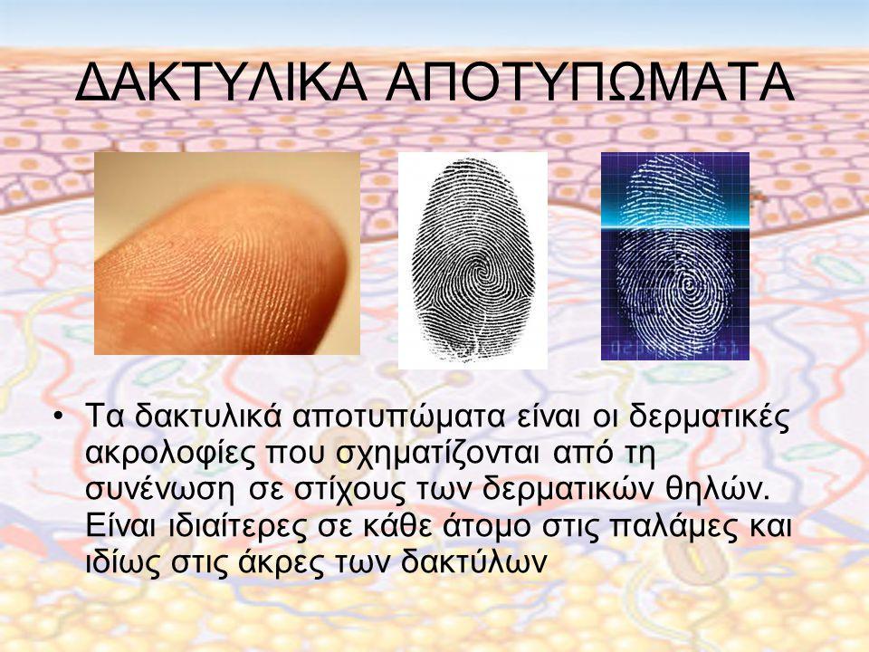 ΔΑΚΤΥΛΙΚΑ ΑΠΟΤΥΠΩΜΑΤΑ Τα δακτυλικά αποτυπώματα είναι οι δερματικές ακρολοφίες που σχηματίζονται από τη συνένωση σε στίχους των δερματικών θηλών.