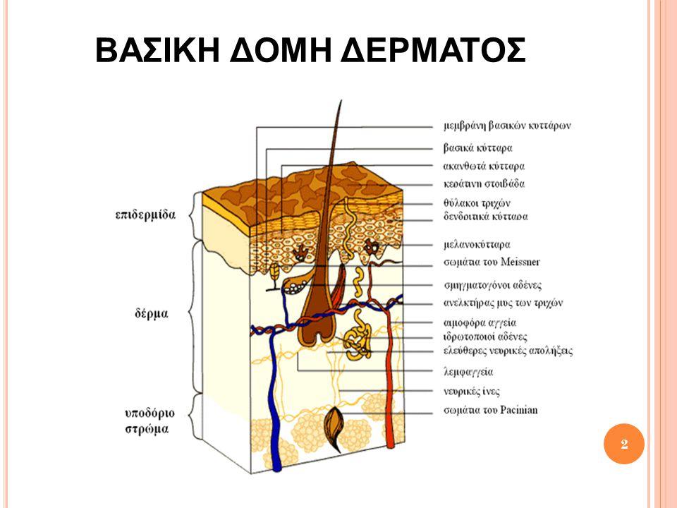 Γ ΕΝΙΚΑ ΓΙΑ ΤΟ ΔΕΡΜΑ Το δέρμα αποτελείται από: 1.Την επιδερμίδα 2.