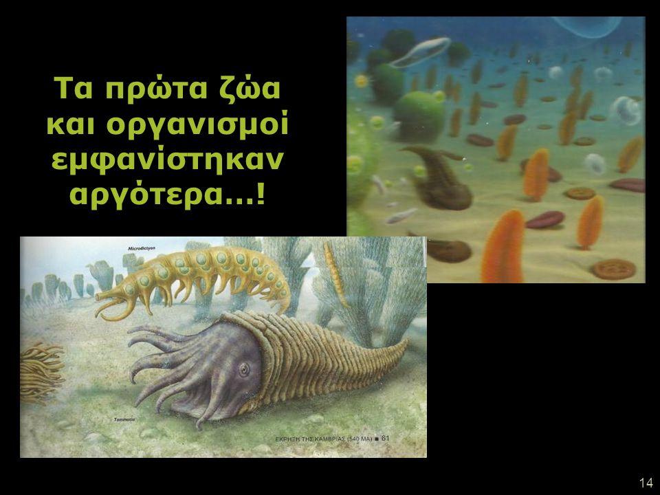 13 Πρωτόγονα φύκια αναπτύχθηκαν μέσα στο βυθό. Σιγά - σιγά μετανάστευσαν προς την επιφάνεια της θάλασσας αναζητώντας φως.