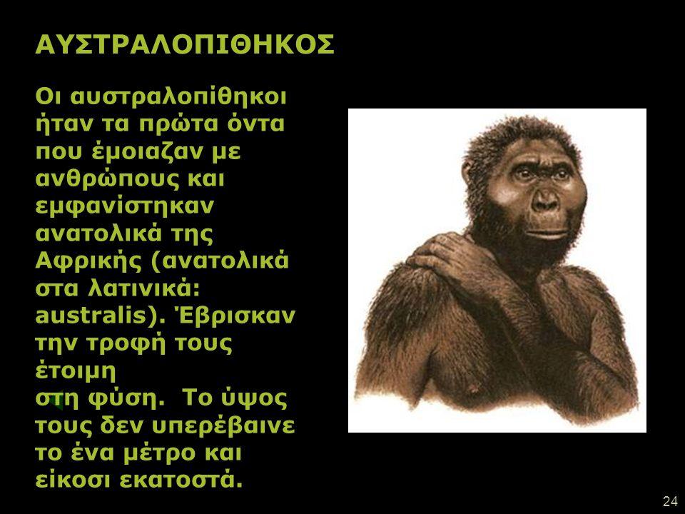 23 Τα πρώτα ανθρωποειδή Πριν 7 εκατομ. χρόνια Η εξαφάνιση των δεινοσαύρων Πριν 65 εκατομμύρια χρόνια Σήμερα Η εξέλιξη της ζωής μετά την εξαφάνιση των