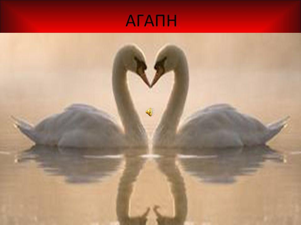 Η αγάπη είναι ένα συναίσθημα έντονης στοργής και προσωπικής αφοσίωσης.Η αγάπη είναι μια αρετή που εκπροσωπεί την ανθρώπινη ευγένεια, συμπόνια και στοργή.