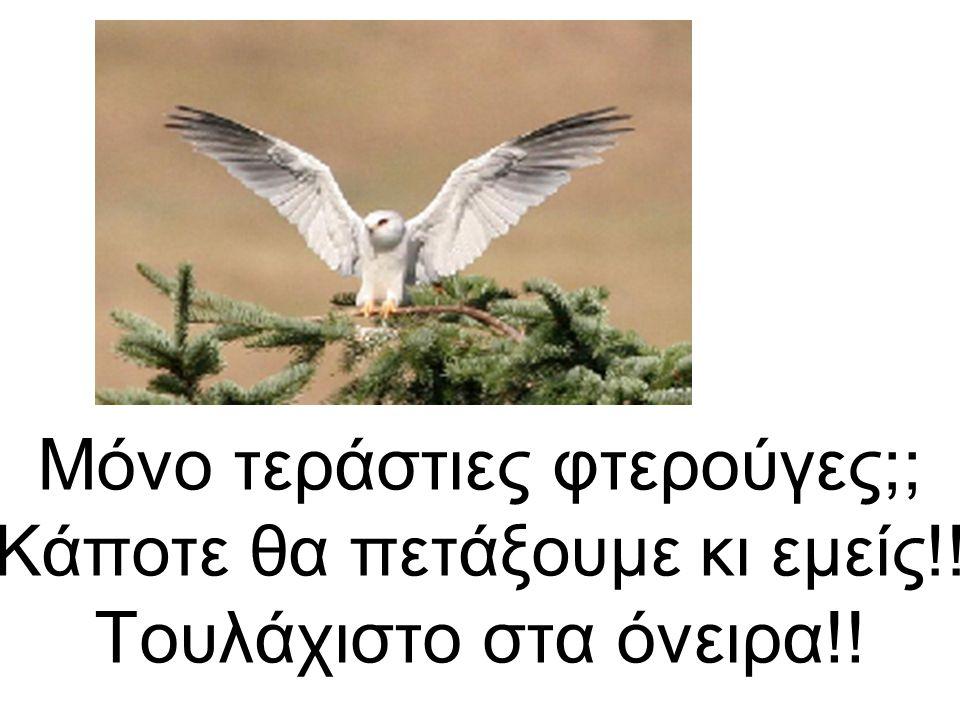 Μόνο τεράστιες φτερούγες;; Κάποτε θα πετάξουμε κι εμείς!! Τουλάχιστο στα όνειρα!!