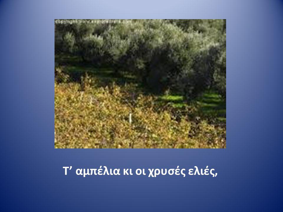 Τ' αμπέλια κι οι χρυσές ελιές,