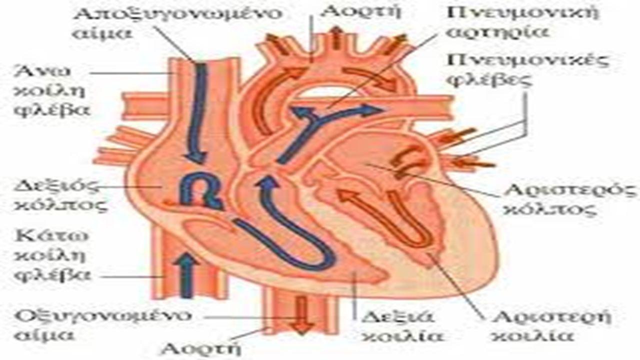 ΚΥΚΛΟΦΟΡΙΑ ΜΙΚΡΗ Την κυκλοφορία του αίματος από την καρδιά προς τους πνεύμονες και αντίστροφα και την ονομάζουμε μικρή κυκλοφορία ΜΕΓΑΛΗ Την κυκλοφορία από την καρδιά προς τα άλλα όργανα του σώματός μας και αντίστροφα και την ονομάζουμε μεγάλη κυκλοφορία.