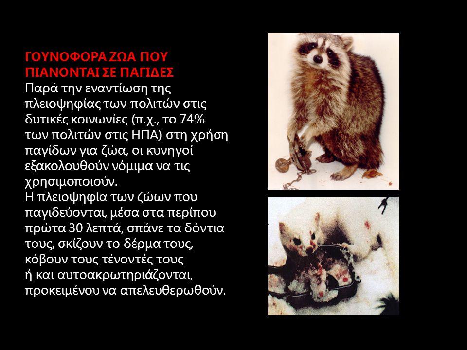 ΓΟΥΝΟΦΟΡΑ ΖΩΑ ΠΟΥ ΠΙΑΝΟΝΤΑΙ ΣΕ ΠΑΓΙΔΕΣ Τις περισσότερες φορές έχουν έναν αργό θάνατο, ο οποίος διαρκεί μέχρι και 3 μέρες, όπου τα ζώα εξαντλούνται από πόνο, αιμορραγία, μόλυνση, πείνα αφυδάτωση, ή και τρώγονται, αβοήθητα, από άλλα ζώα.