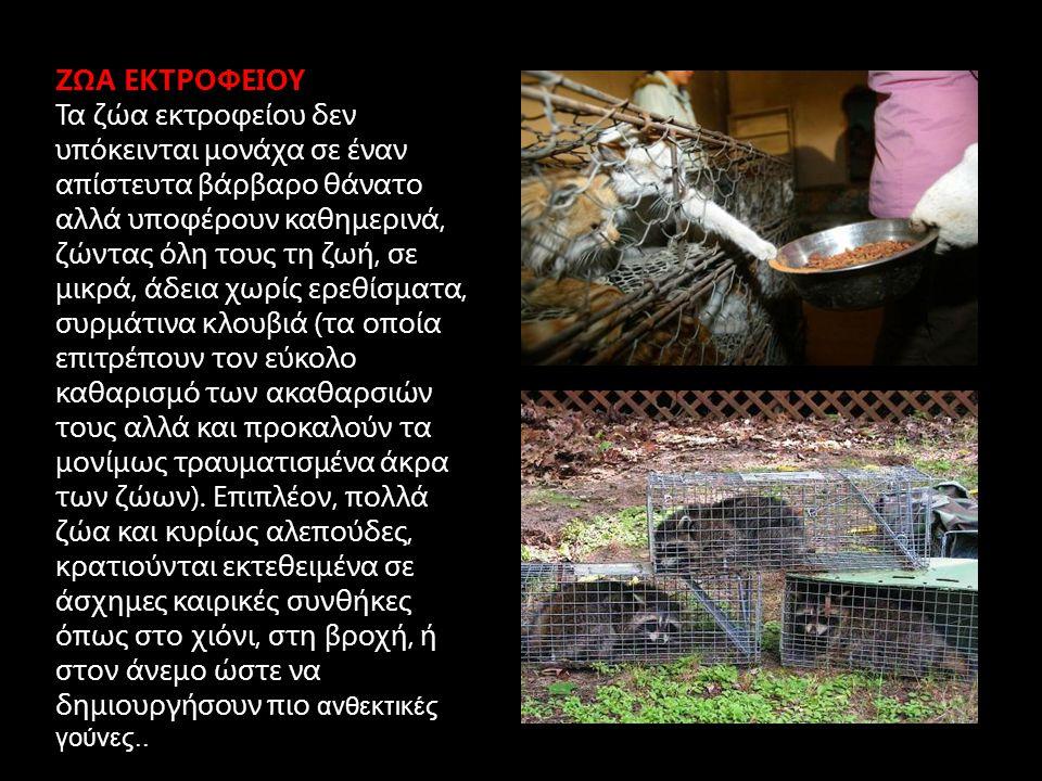 ΖΩΑ ΕΚΤΡΟΦΕΙΟΥ Τα ζώα εκτροφείου δεν υπόκεινται μονάχα σε έναν απίστευτα βάρβαρο θάνατο αλλά υποφέρουν καθημερινά, ζώντας όλη τους τη ζωή, σε μικρά, άδεια χωρίς ερεθίσματα, συρμάτινα κλουβιά (τα οποία επιτρέπουν τον εύκολο καθαρισμό των ακαθαρσιών τους αλλά και προκαλούν τα μονίμως τραυματισμένα άκρα των ζώων).
