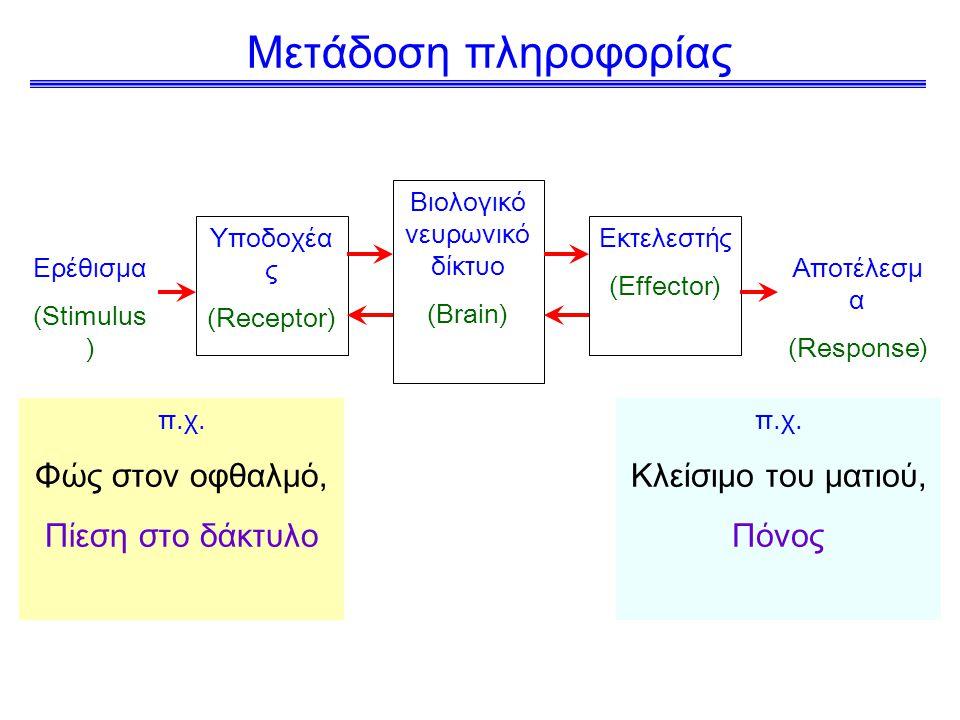 Μετάδοση πληροφορίας Ερέθισμα (Stimulus ) Υποδοχέα ς (Receptor) Βιολογικό νευρωνικό δίκτυο (Brain) Εκτελεστής (Effector) Αποτέλεσμ α (Response) π.χ.