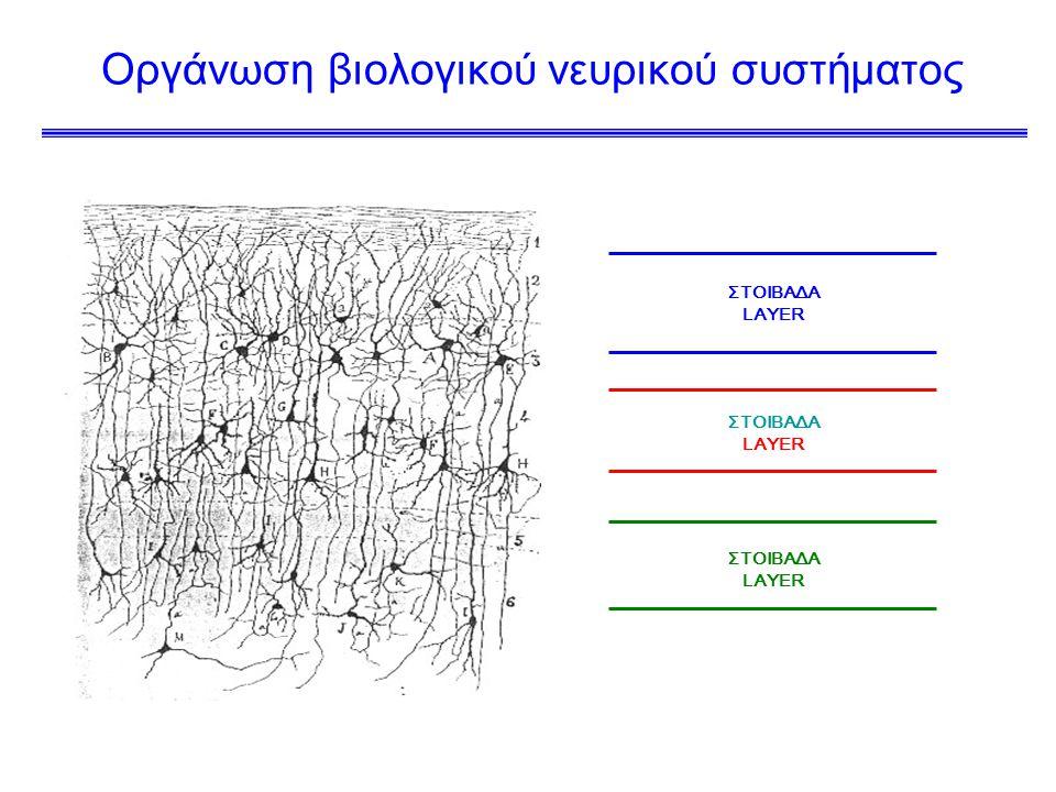 Οργάνωση βιολογικού νευρικού συστήματος ΣΤΟΙΒΑΔΑ LAYER ΣΤΟΙΒΑΔΑ LAYER ΣΤΟΙΒΑΔΑ LAYER