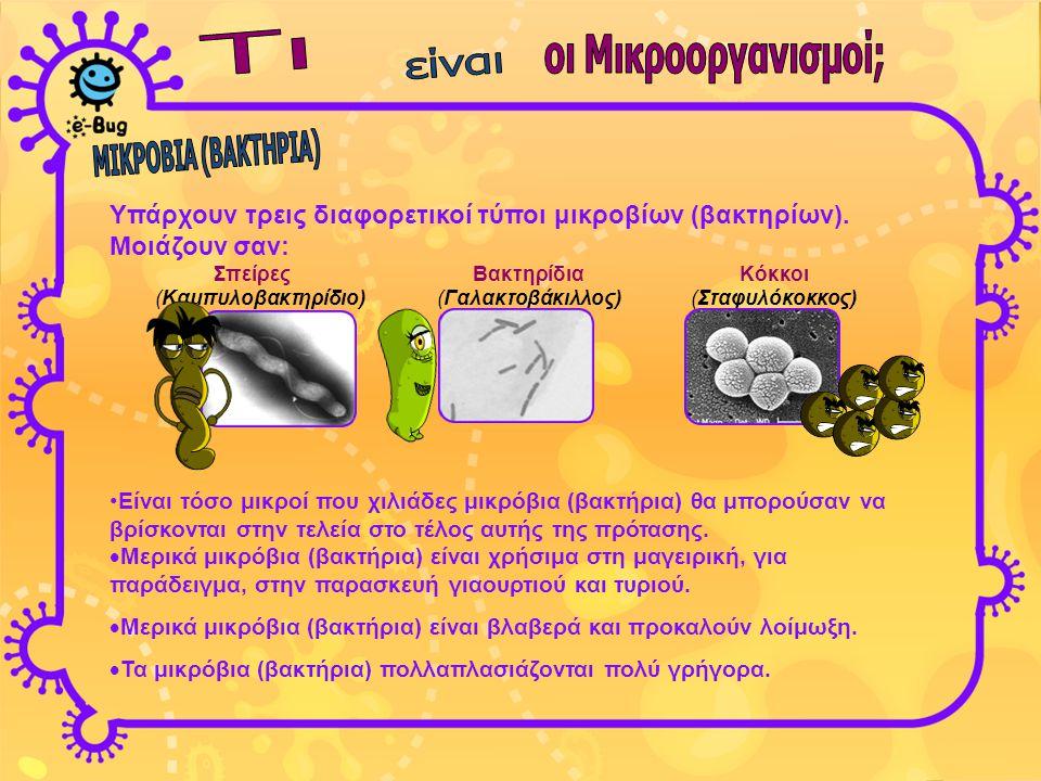 Υπάρχουν τρεις διαφορετικοί τύποι μικροβίων (βακτηρίων). Μοιάζουν σαν: Σπείρες Βακτηρίδια Κόκκοι (Καμπυλοβακτηρίδιο) (Γαλακτοβάκιλλος) (Σταφυλόκοκκος)