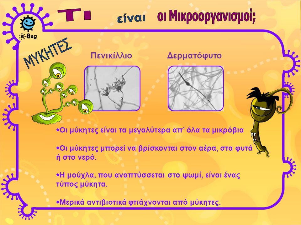 ΠενικίλλιοΔερματόφυτο  Οι μύκητες είναι τα μεγαλύτερα απ' όλα τα μικρόβια  Οι μύκητες μπορεί να βρίσκονται στον αέρα, στα φυτά ή στο νερό.  Η μούχλ