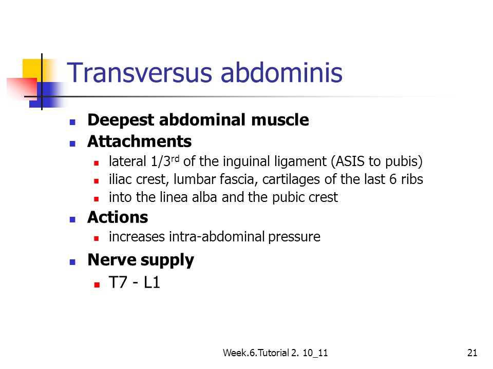 Week.6.Tutorial 2. 10_1121 Transversus abdominis Deepest abdominal muscle Attachments lateral 1/3 rd of the inguinal ligament (ASIS to pubis) iliac cr