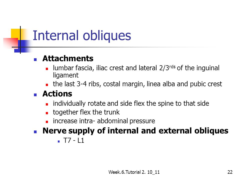 Week.6.Tutorial 2. 10_1122 Internal obliques Attachments lumbar fascia, iliac crest and lateral 2/3 rds of the inguinal ligament the last 3-4 ribs, co
