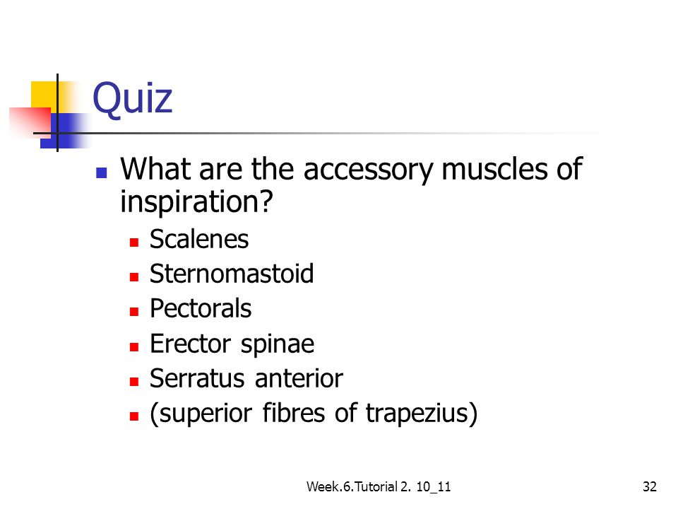 Week.6.Tutorial 2. 10_1132 Quiz What are the accessory muscles of inspiration? Scalenes Sternomastoid Pectorals Erector spinae Serratus anterior (supe